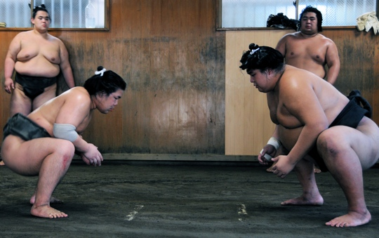 sumo wrestlers face off