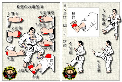 depiction of martial arts body parts to strike with